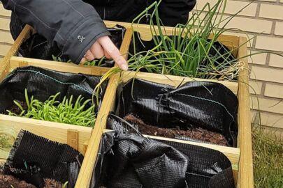 Tuinieren bij Stichting Zorgtrecht Utrecht